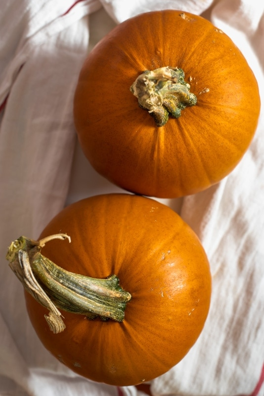 Pumpkin pie squash